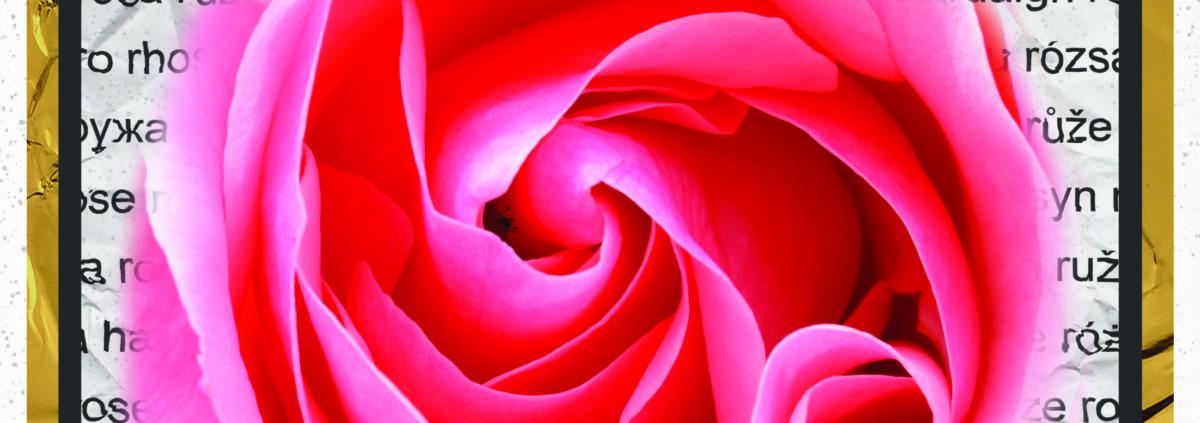 Foto's: La Vie en Rose